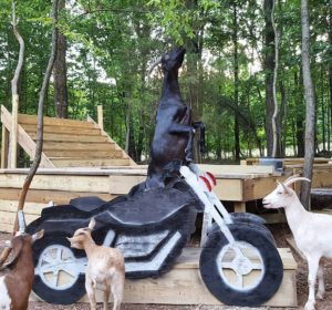 Photo by Leanne Lauricella - Goats of Anarchy