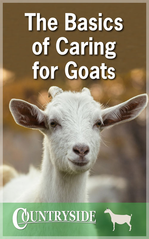 Caring for Goats