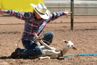 The Secret Life of Rodeo Goats