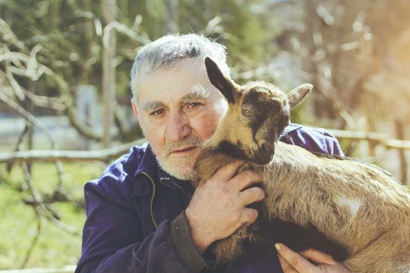 Therapy Goats: From Hoof to The Heart
