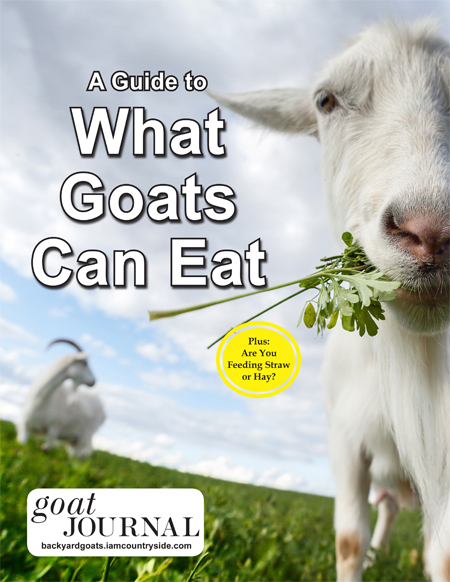 A Guide to What Goats Can Eat