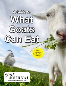 What Goats Can Eat