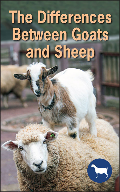 Goat and Sheep Differences