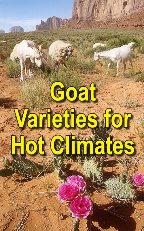 Goats For Hot Climates