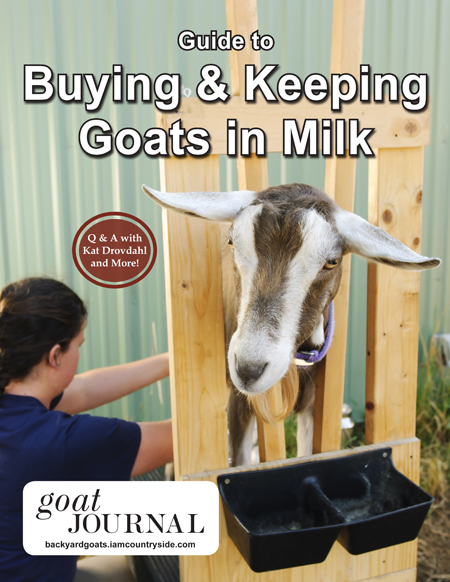 Buying and Keeping Goats in Milk