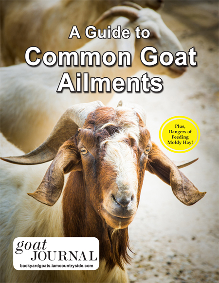 A Guide to Common Goat Ailments