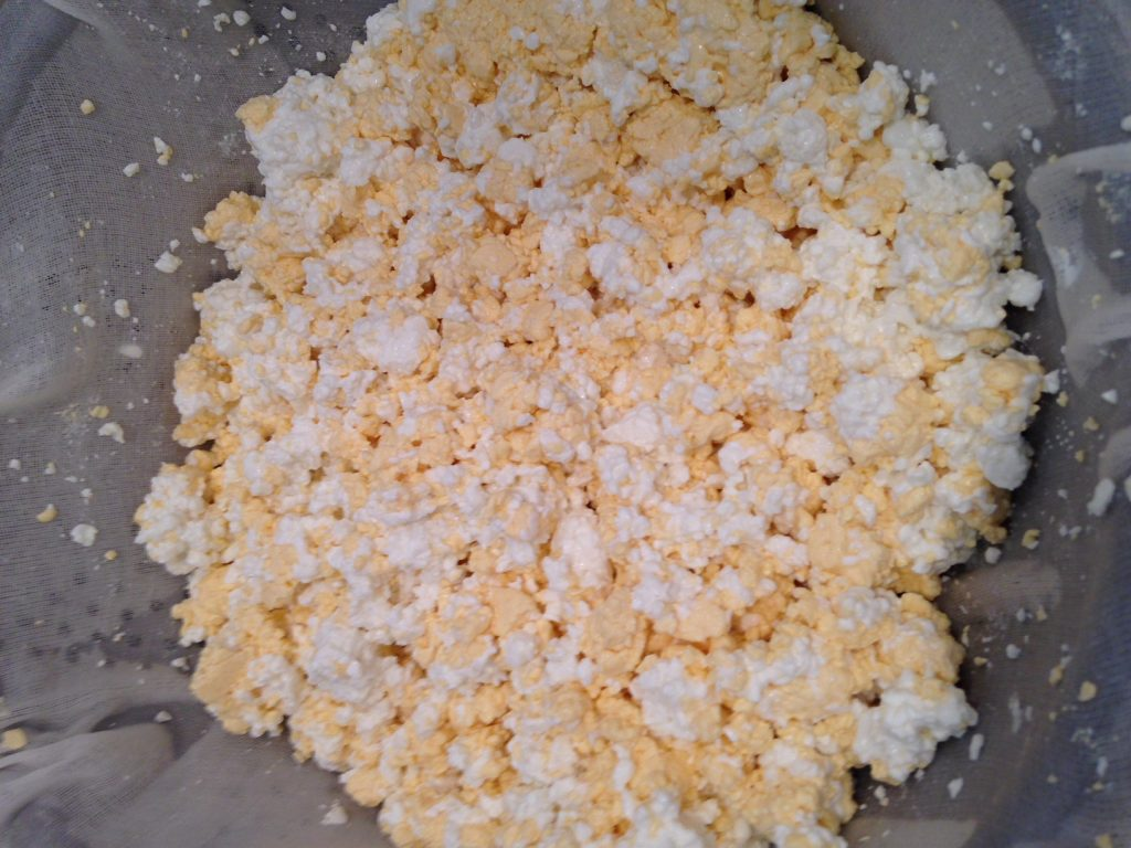 how-to-make-cheese-curds
