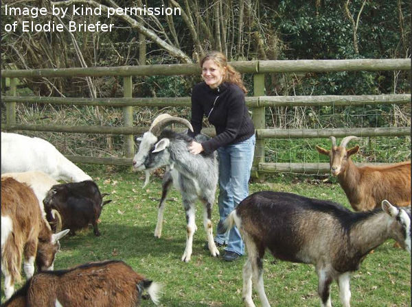 How Do Goats Think and Feel?
