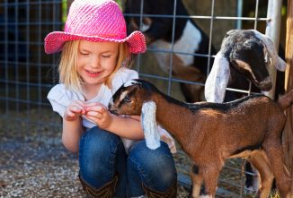 Raising Goats Can Lead to Four-Legged Best Friends