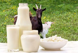 The Benefits and Disadvantages of Goat Milk