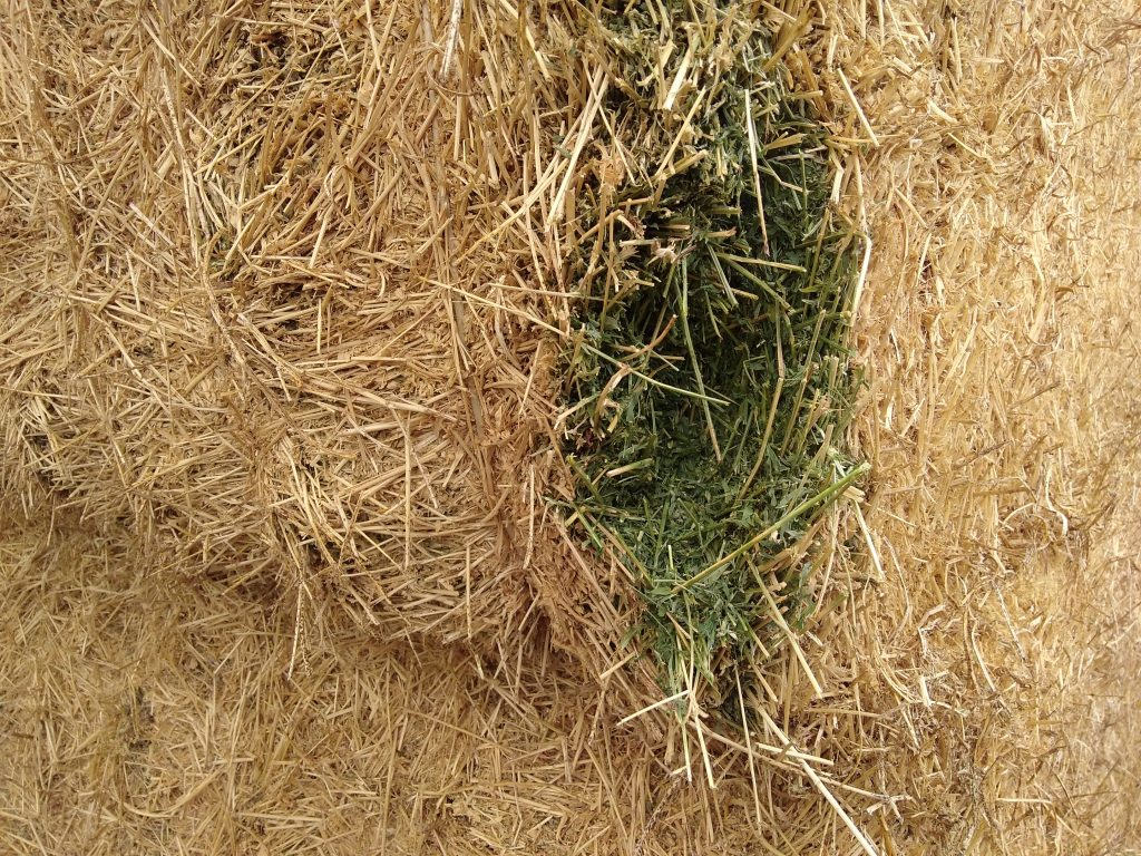 hay-for-goats