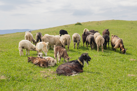 Keeping Sheep and Goats Together