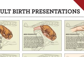 Difficult Birth Presentations