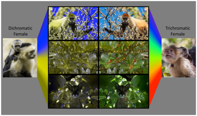 animal-color-vision