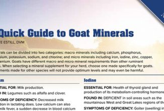 A Quick Guide to Goat Minerals