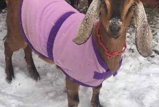 The Truth About Coats for Goats!
