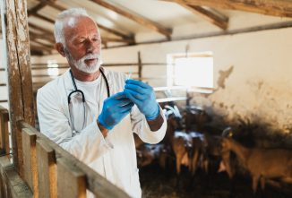 Back from The Vet: Antibiotic Use in Goats