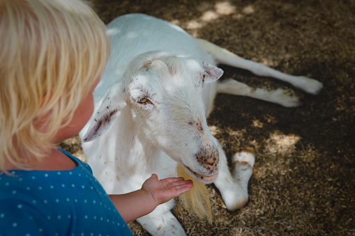 The Role of Thiamine for Goats and Other B Vitamins