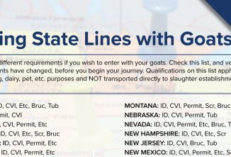 Crossing State Lines with Goats