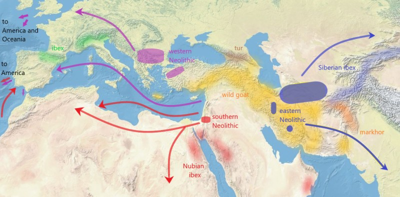 map-domestication-of-goat