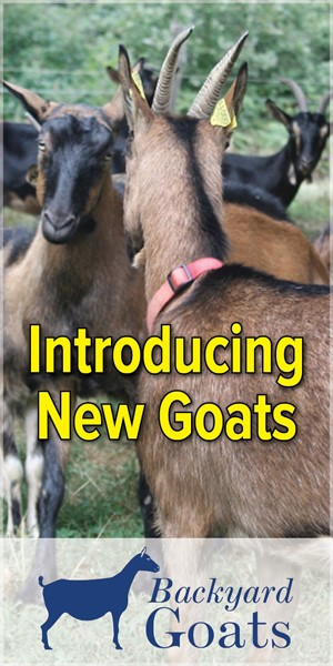 introducing-new-goats
